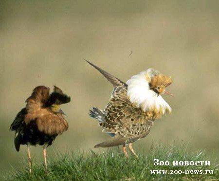 Форум «Самарского охотника» > Охота с соколами &#187; title=&#187;Форум «Самарского охотника» > Охота с соколами &#171;></div><p>Охота на зайца с сокалами.И че, типа сокол зайца ловит, а ты бежишь к нему быстрей, пока он не успел его сожрать?</p></p></div><footer class=