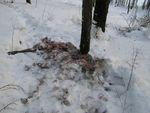В регионе на законодательном уровне запретили отстрел диких собак